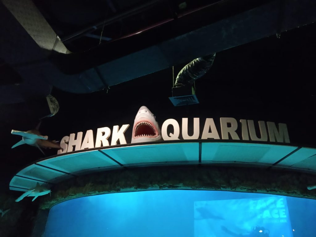 shark aquarium seaworld