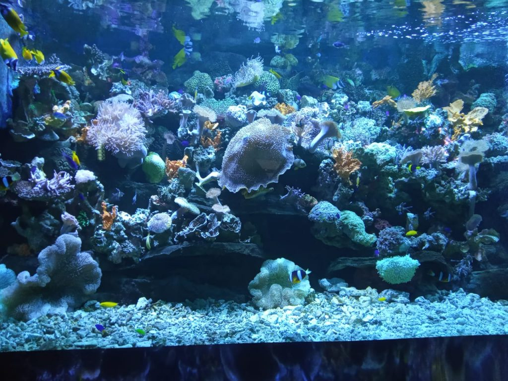 terumbu karang seaworld